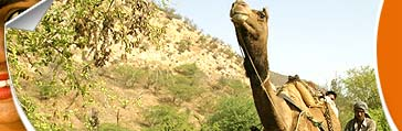 Rajasthan Tours Travel, Rajasthan India Tours Travel, Tours and Travel of Rajasthan India
