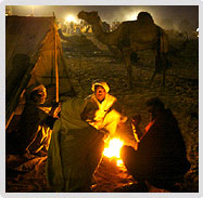 Winter Night, Pushkar